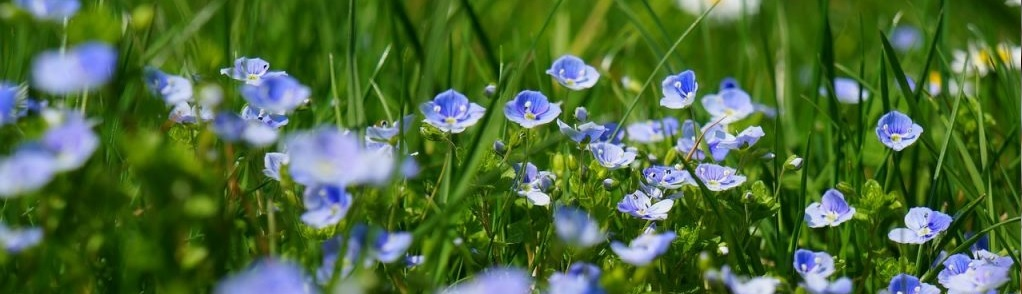 Tuin van weldadigheid Oudbergveen