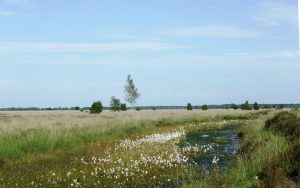 Drents-Friese Wold zomer